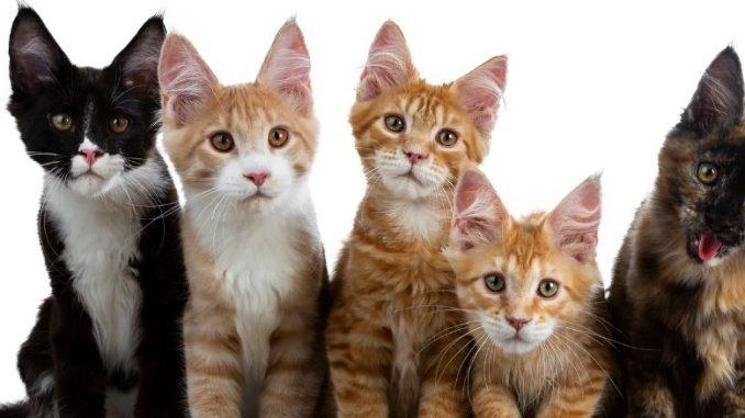 Les 5 races des plus petits chats. Chats bruns et noirs alignés et tendant la tête.