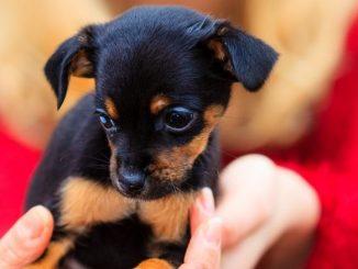quelles sont les demarches a suivre pour adopter un chien