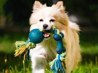 quel jouet acheter à votre chien