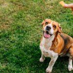 quelle friandises donner à votre chien