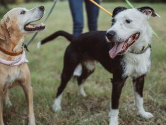 quelles sont les solutions utiles pour faire garder son chien